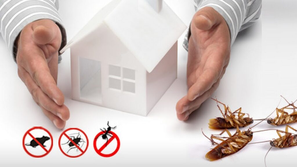 Leave It To The Professionals: Hiring Pest Control To Eradicate Pesky Vermin